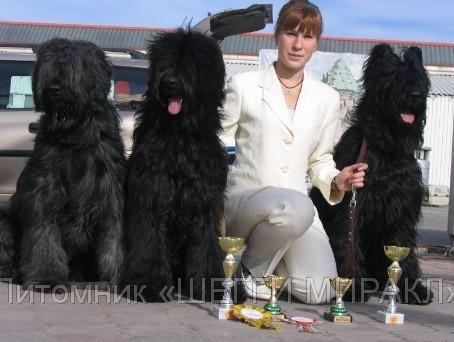 БРИАР(Французская овчарка)щенки - Россия.