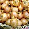купить лук севок продажа оптом, реалезация выращевание+ хранение.