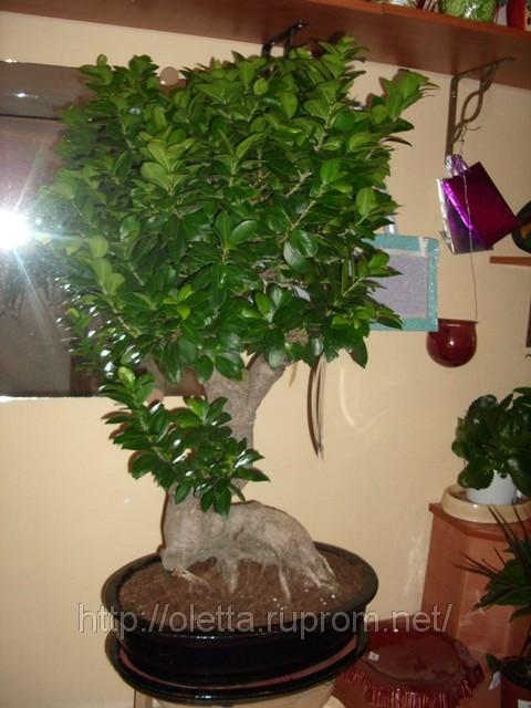 Для комнатных растений комнатные