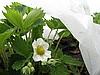...полимерный нетканый материал для защиты растений в открытом грунте.