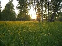 http://ruprom-image.s3.amazonaws.com/3718325_w200_h200_uchas.ermolaevo3.jpg